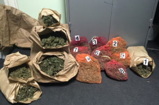 Zaplenjeno 36 kilograma marihuane