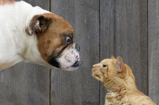 KONAČNA ISTINA Evo zašto se psi i mačke NIKAKO NE VOLE