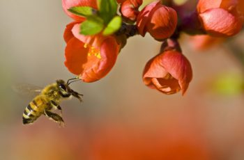 Simbol pčele kod starih Sumera