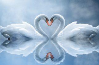 SINDROM  SLOMLJENOG  SRCA – kad ljubav može da ubije?!